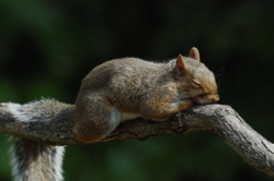 Architecturesleeping_squirrel.jpg